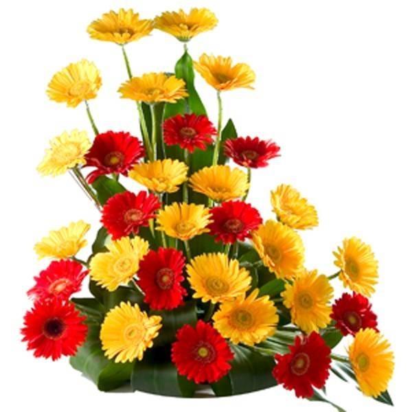 Sania Flowers